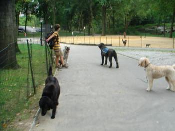 dogs4.JPG